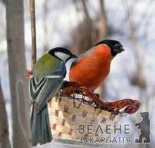 Закарпатців запрошують взяти участь у Всеукраїнській акції допомоги птахам
