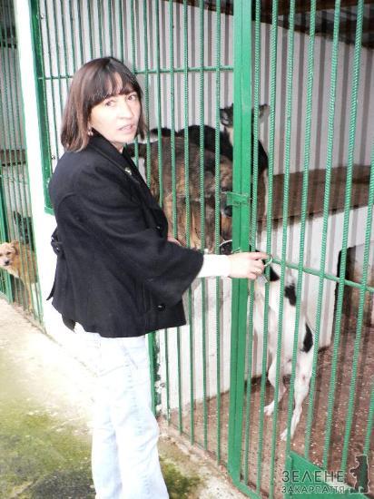 Мукачівський міський комунальний притулок для бездоглядних тварин MTYuMTAuMjAxMi0yMzoyMTcwNTMw1109